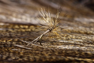 Quilled Coq de Leon Dry Fly | by sculpin_crusader