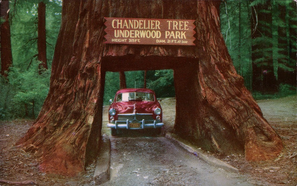 Chandelier Drive Thru Tree Underwood Park California By Swellmap