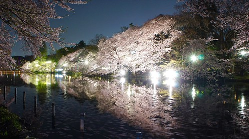 Kichijoji Cherry Blossom Illuminations | by Manish Prabhune