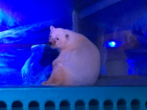 Polar Bear at Grandview Aquarium