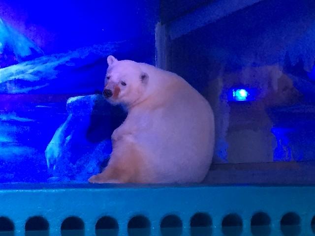 Polar Bear at Grandview Aquarium