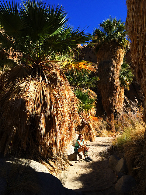 Hiking in a palm canyon, CA, USA