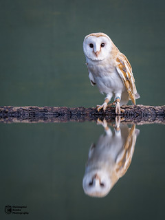 Owl Reflections | by Christopher Combe Photography