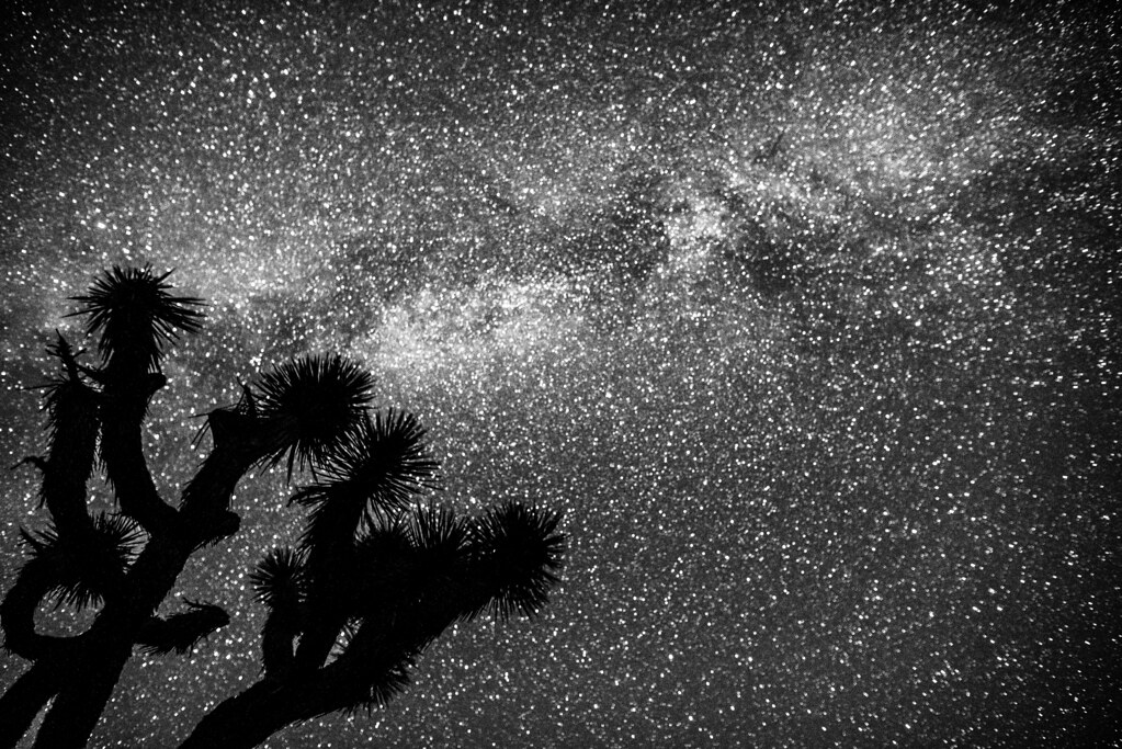 by Joshua Tree Starry Night Astrophotography! Nikon D810 Fine Art Night  Milkyway Photography! | by