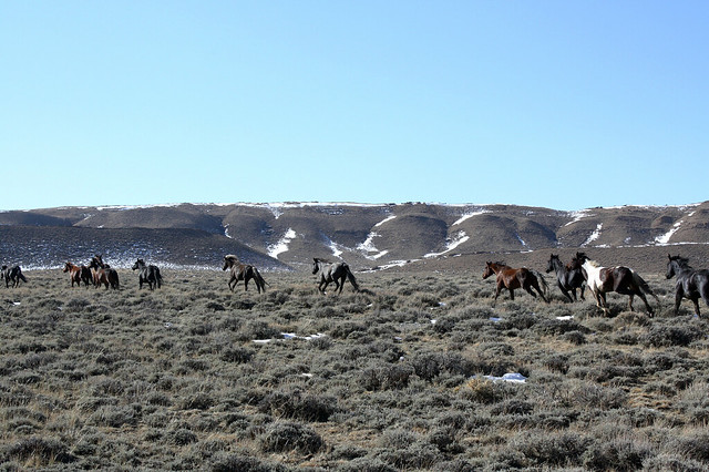 Wild Horse Herd Management Areas