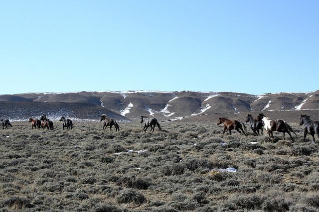 Wild Horse Herd Management Areas