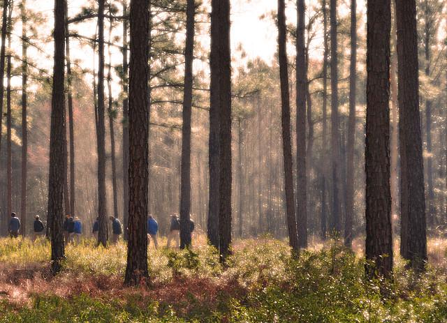 Zuni Pine Barrens (11)