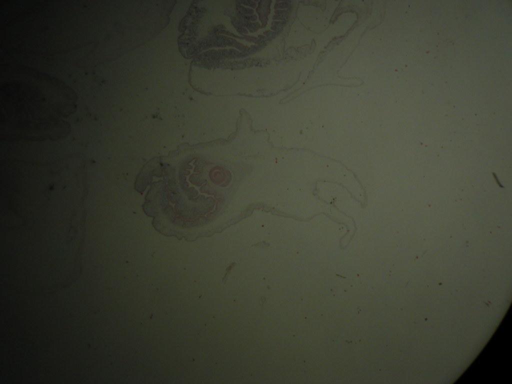 064 連節共尾のう虫 | 酪農学園...