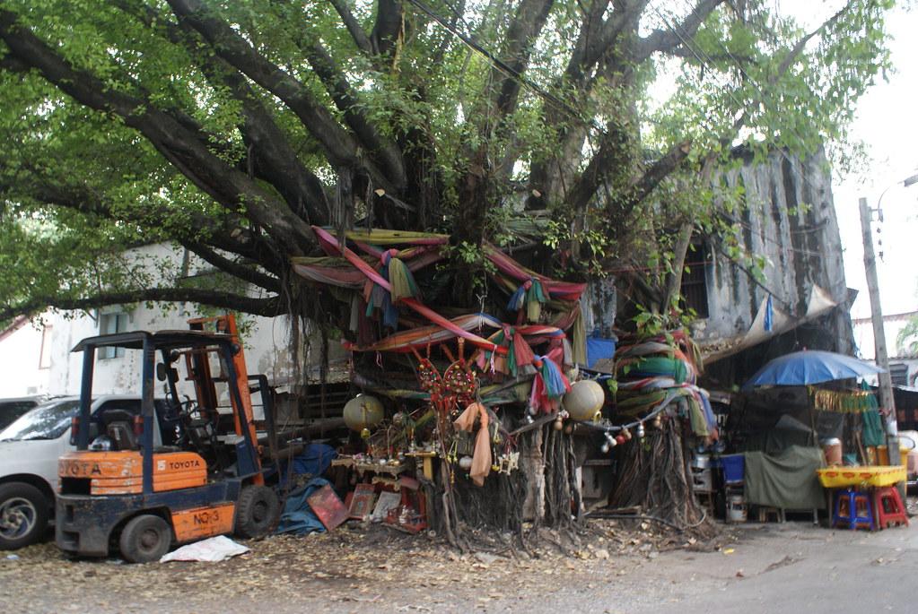 Arbre vénéré dans un coin de Chinatown près du fleuve à Bangkok.