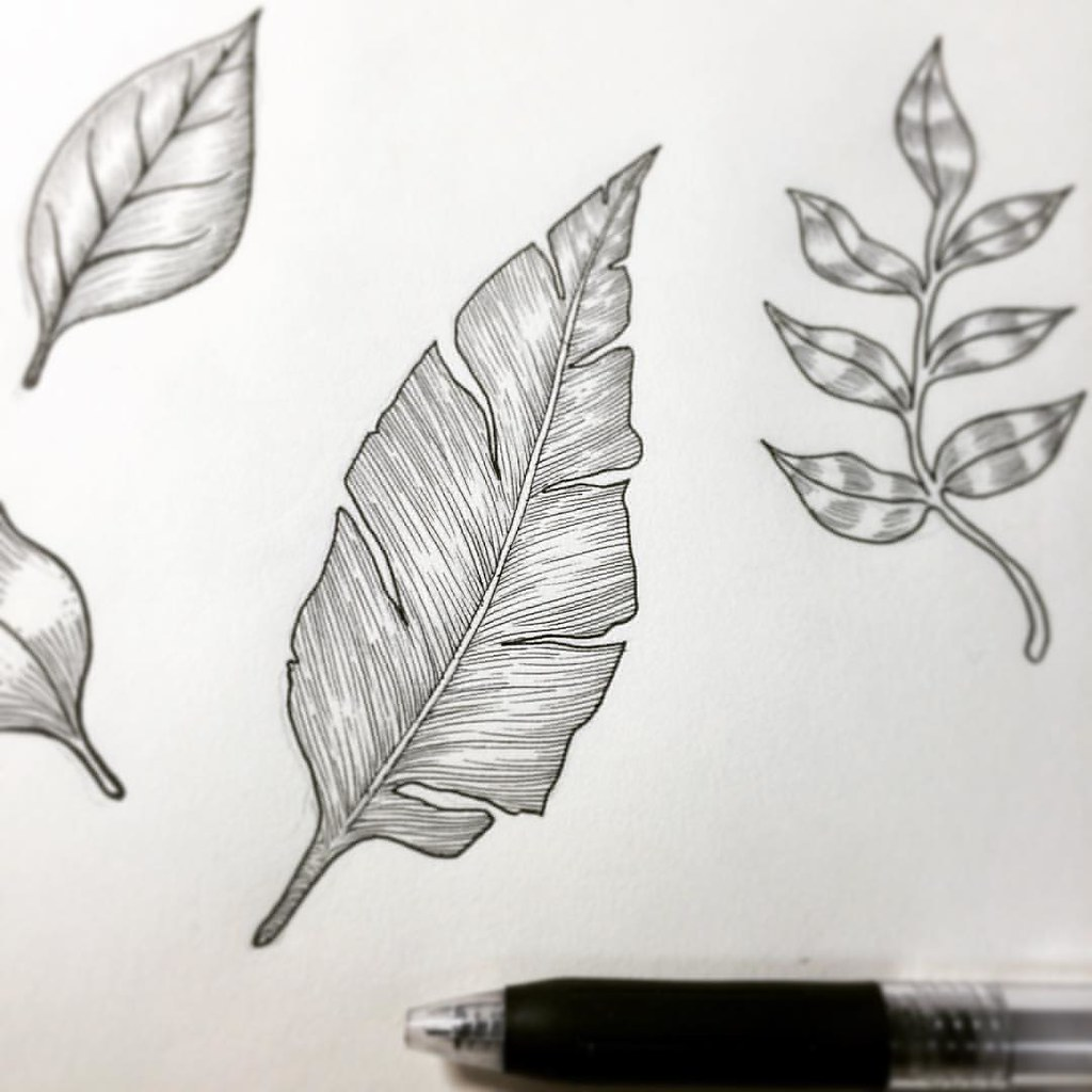 Leaves drawing leaves line black blackandwhite sketch sketchbook leaf
