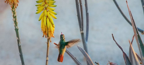 slider_hummingbird_aloe | by sara strother