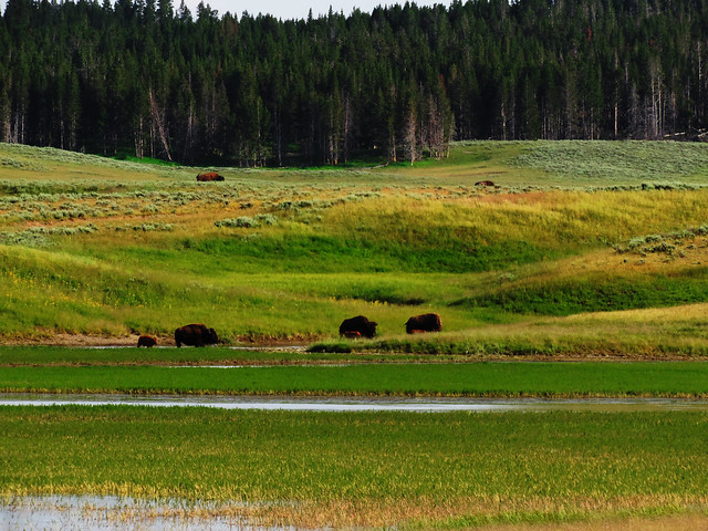 Hayden Valley, Yellowstone National Park, USA