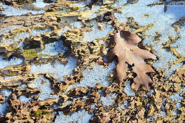 Oaken Frost Marsh