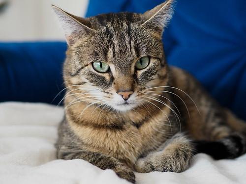 Is Tuna Cat Food Safe Foa Cat