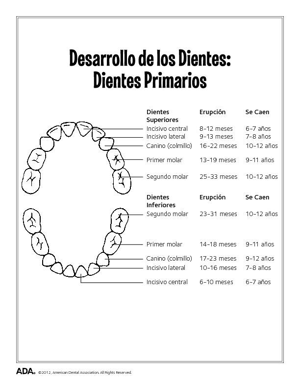 Ada Org Primary Tooth Eruption Charts Spanish Marty Prada Flickr