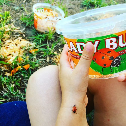 Our favorite spring tradition: releasing ladybugs in the garden | by ex.libris