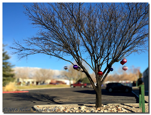 A Charlie Brown Christmas Tree | by HelenV18