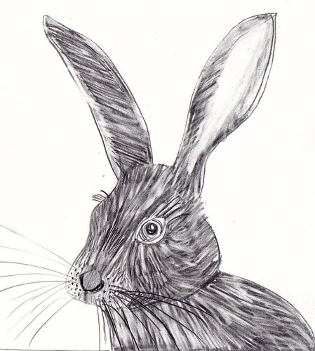 Ee is for erasure rabbit #3 | by Laura Lea