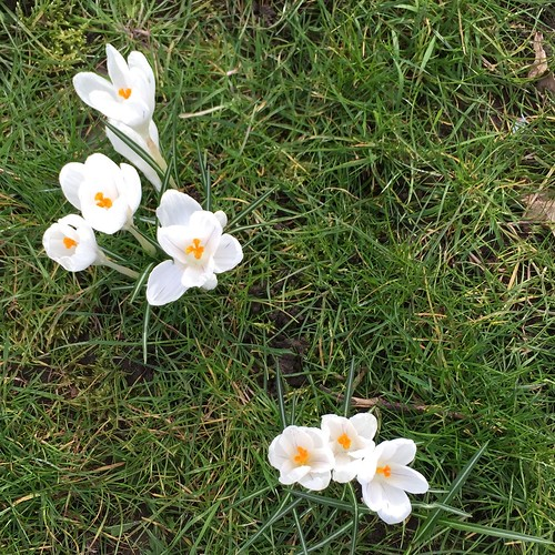 Kew in Spring - crocuses | by louise_using_spoons