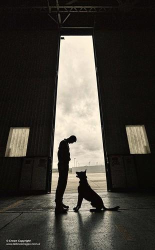 Image Result For Dog Training Career