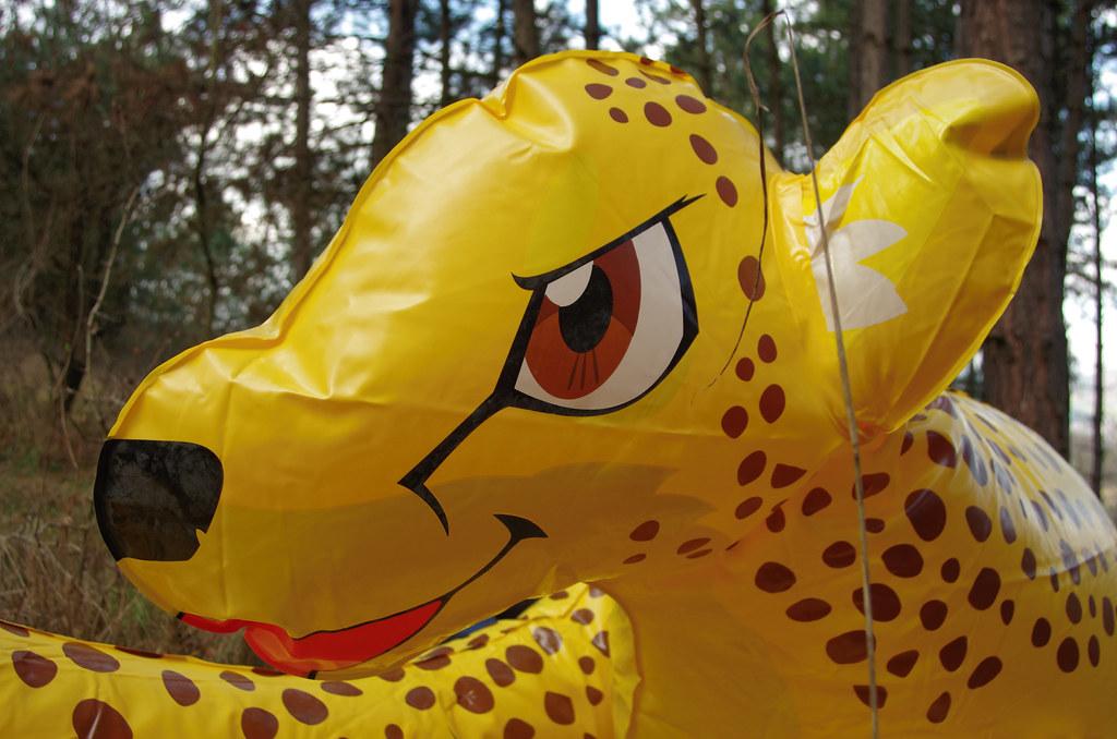 Cheetah Inflated | By Rodsh130 Cheetah Inflated | By Rodsh130