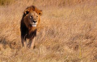 Botswana-Moremi reserve Botswana