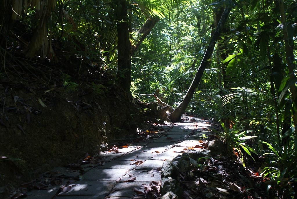 Dans la végétation luxuriante du parc national de Koh Lanta.