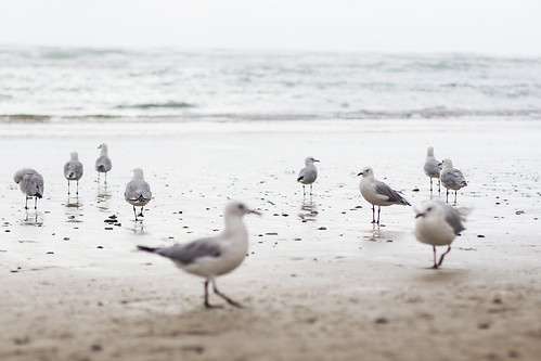 seagulls at the sea shore | by Idunn / vintersolverv