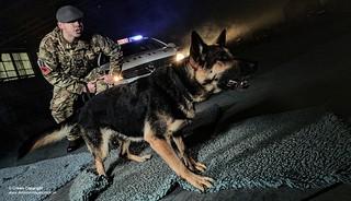 Dog Training Portsmouth