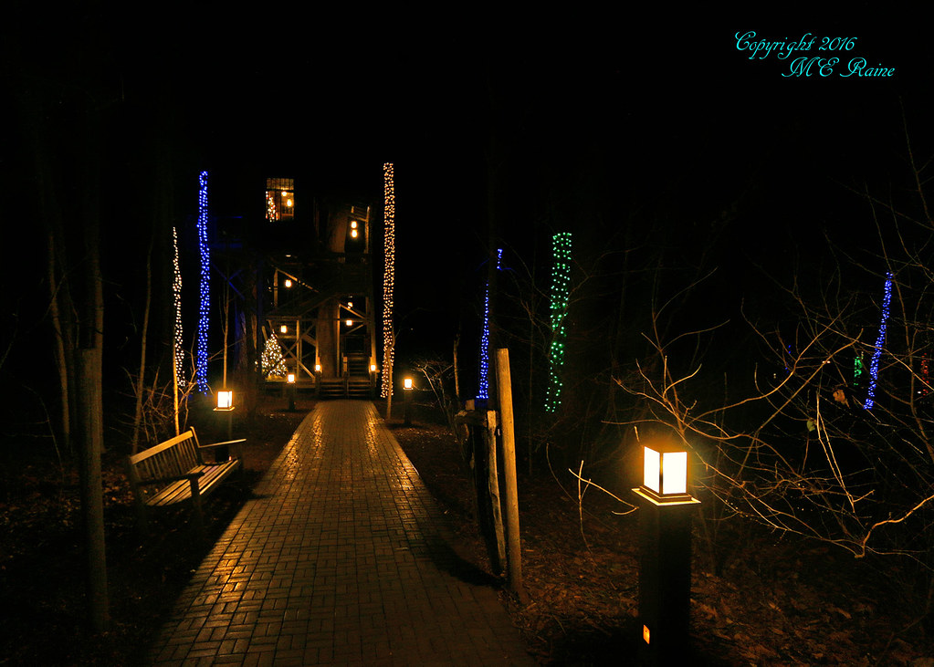 by 2015 longwood christmas outdoor rainbow of tree trunk lights 5 of 7by