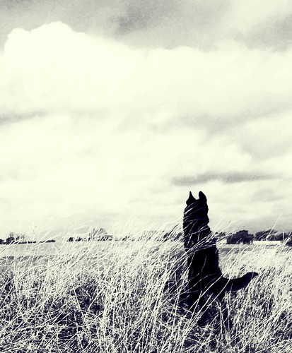 Black dog, grey sky. | by evaphansson