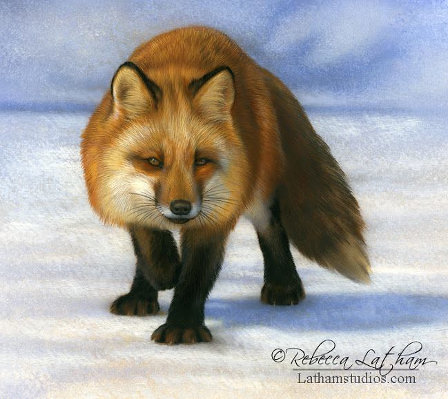 Red Fox Watercolor On Board 6in X 6in Rebecca Latham Hope You Enjoy