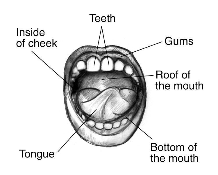 24316809413_73054f981f_b mouth drawing drawing showing labels pointing to teeth, gu flickr
