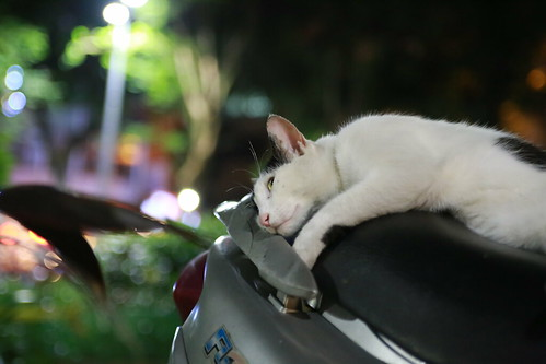 スクーターの上で寝転ぶ台湾の猫の写真