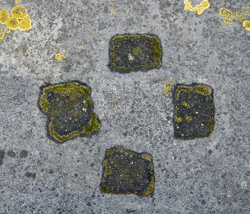 Abstract lichen texture on a wall in Bruge, Belgium