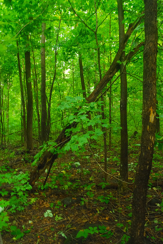Beech Maple Forest ~ Forest mayville ledge beech maple woods wisconsin state
