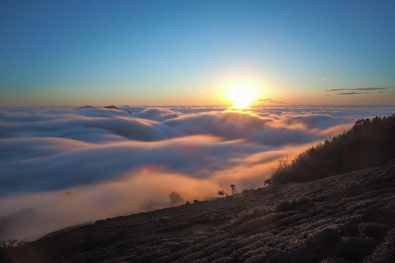 夕陽 頂石棹 阿里山|OLYMPUS E-M5 MKII MK2
