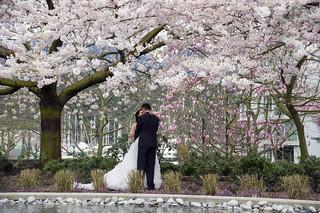 Cherry Blossom Wedding Cake Designs