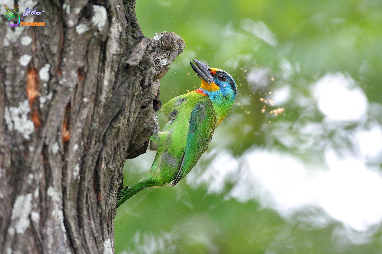 壁纸 动物 鸟 鸟类 雀 1500_1000