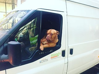 Met Roxy the white van dog in #London today. | by CTRLF5