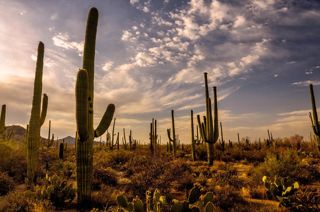 Sonoran Desert II