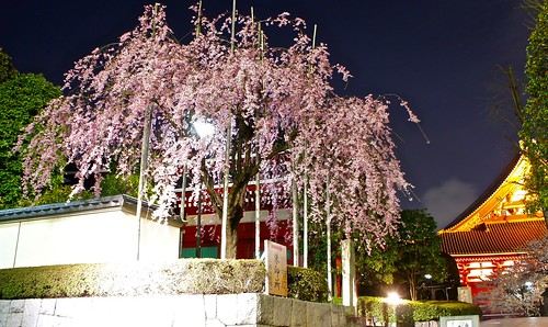 Asakusa Yozakura - Night time illumination of cherry blossoms | by Manish Prabhune