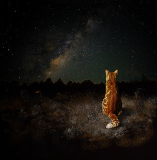 cats under the stars | by CactisBoy