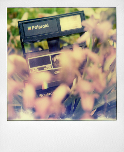 Polaroid 635CL in the spring | by @necDOT