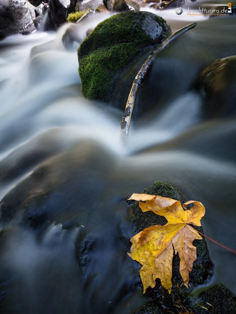 Witness of autumn