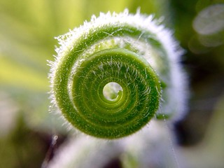 Macro Beauty Spiral Nature Morning Dew Winter Creativity Close-up Frost Depth Of Field Iphonography | by bmaharjan