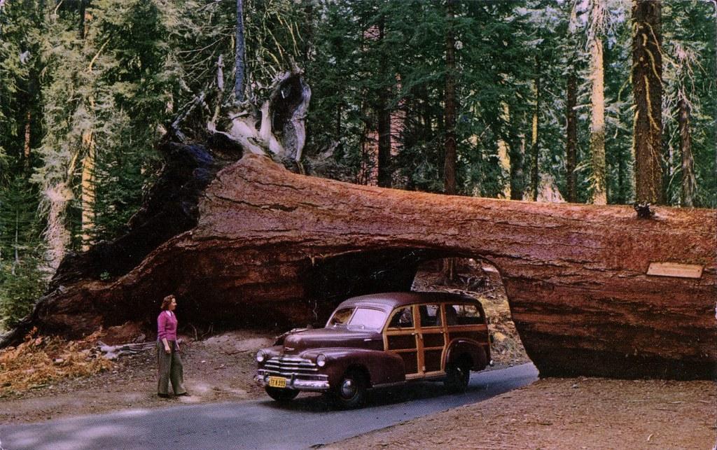 Tunnel Tree Sequoia National Park California SwellMap Flickr - National parks california