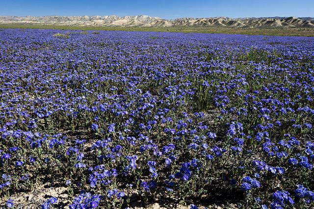 Carrizo Plain National Monument