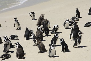 Sudafrica_ Cape Point