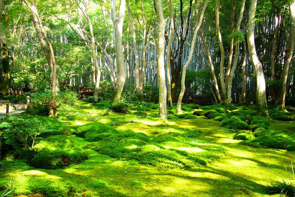 Gio-ji, Moss Garden -1 (October 2011)